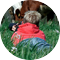 Florina macrofotografie met koe eduappprofielfoto