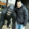 Gorilla vriend
