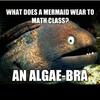 Mermaid math class algebra algae bra joke