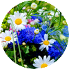 Lovely colorful flowers wallpapers hd