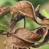 Animal camouflage 20