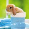 Konijnen achtergronden dieren hd konijnen wallpapers foto 1 1
