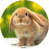 Cute baby bunnies 8121 hd wallpapers in animals   imagesci.com