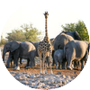Giraf en olifanten 48549894