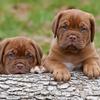 Mooie honden achtergronden leuke honden wallpapers 09