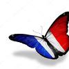 Depositphotos 9577052 stockafbeelding franse vlag vlinder vliegen gesoleerde