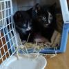 Kittens  pepper en snoet